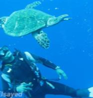 Bait Al Aqaba Diving Center
