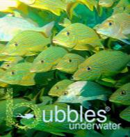 Bubbles Underwater