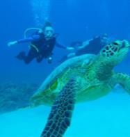 Hawaii Eco Divers  Surf Adventures