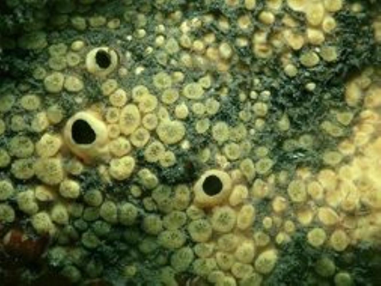 Boring Sponge