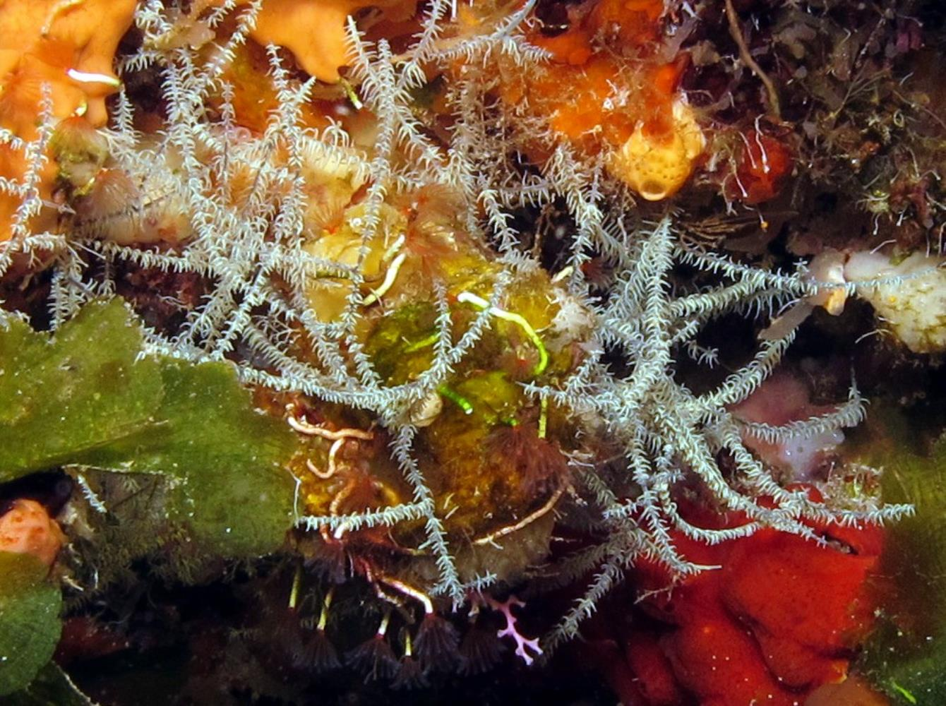 Hair Net Black Coral