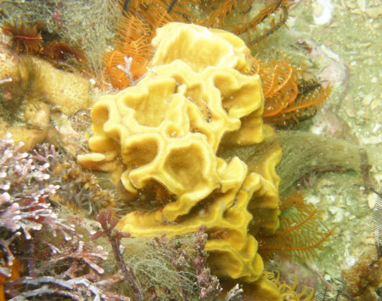Scroll sponge