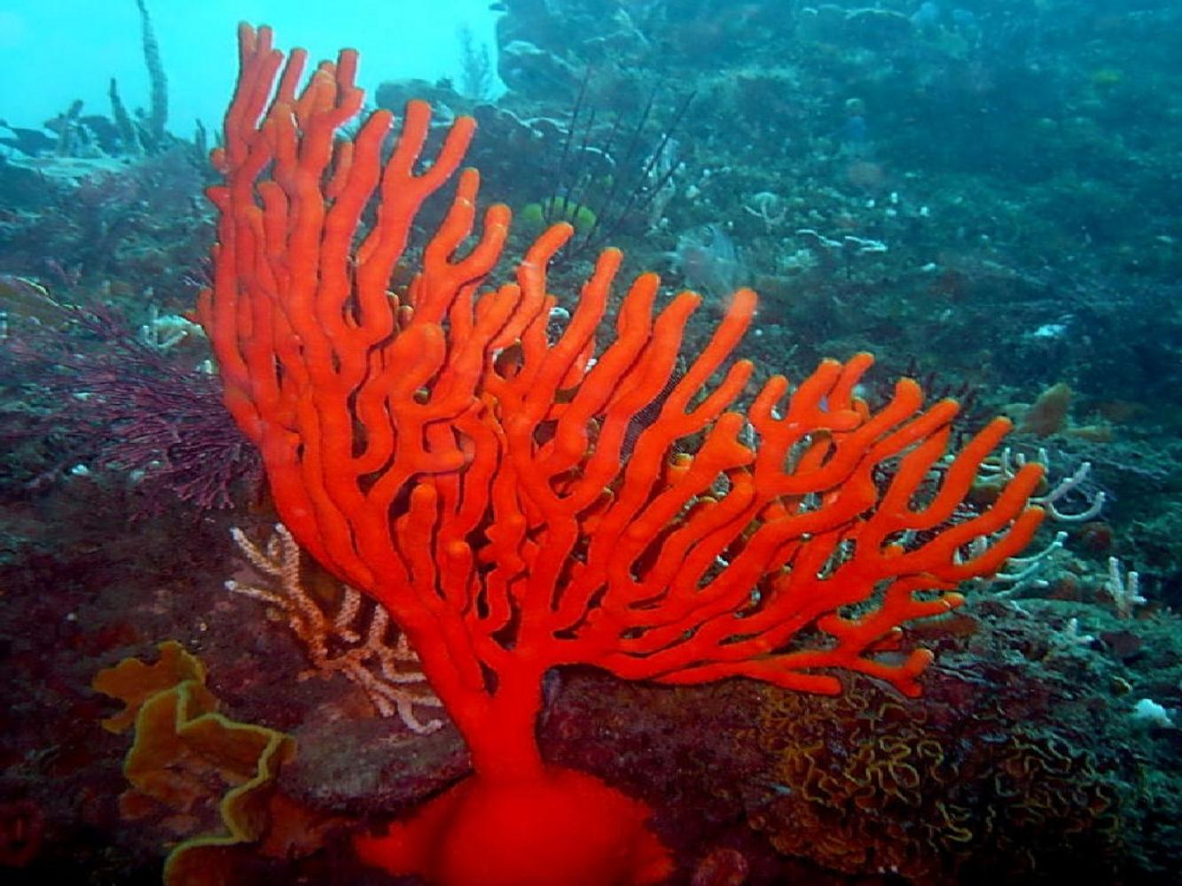 Sinuous sea fan