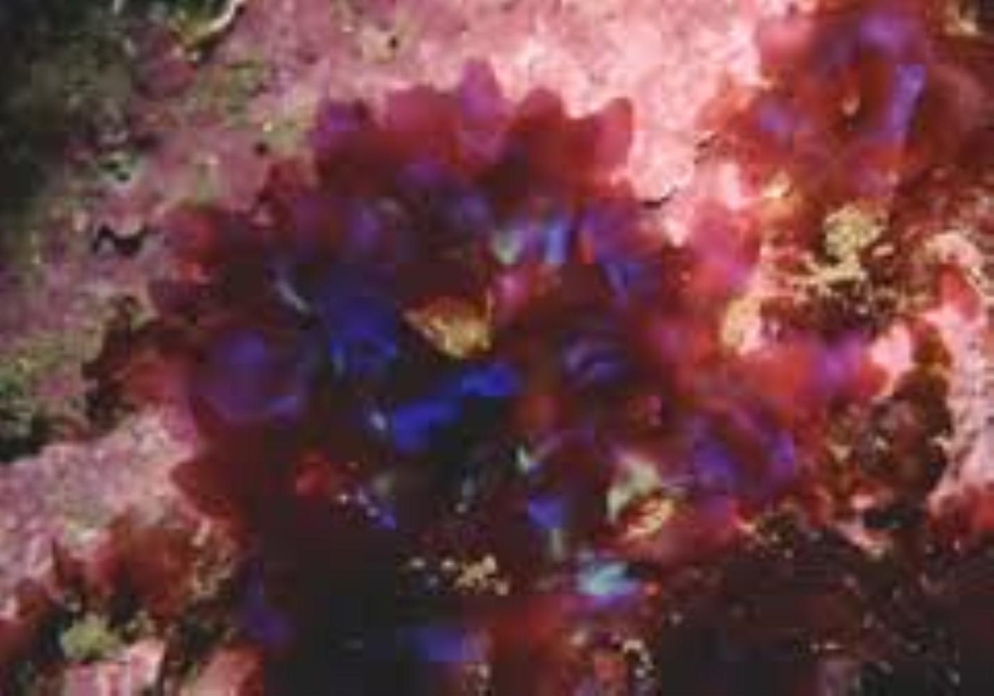Spectacular Seaweed