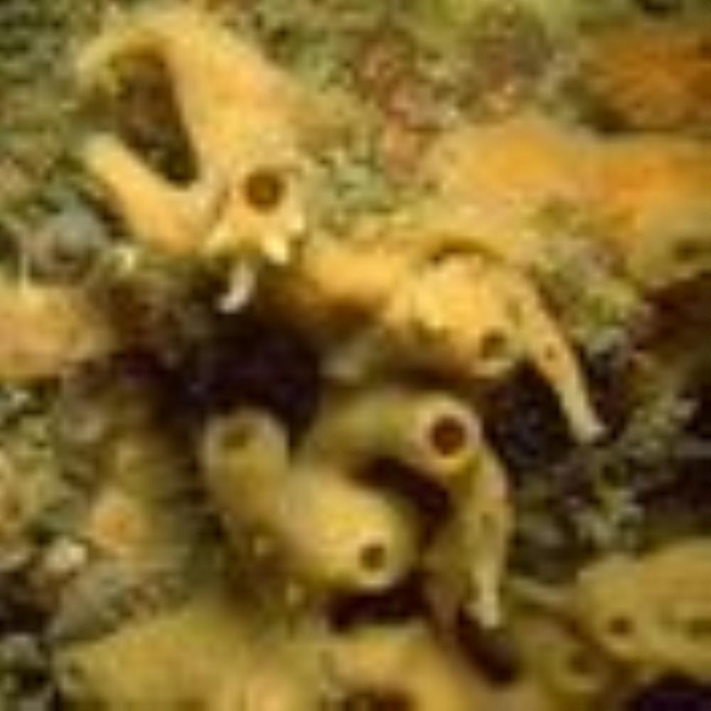 Spiky tube-sponge