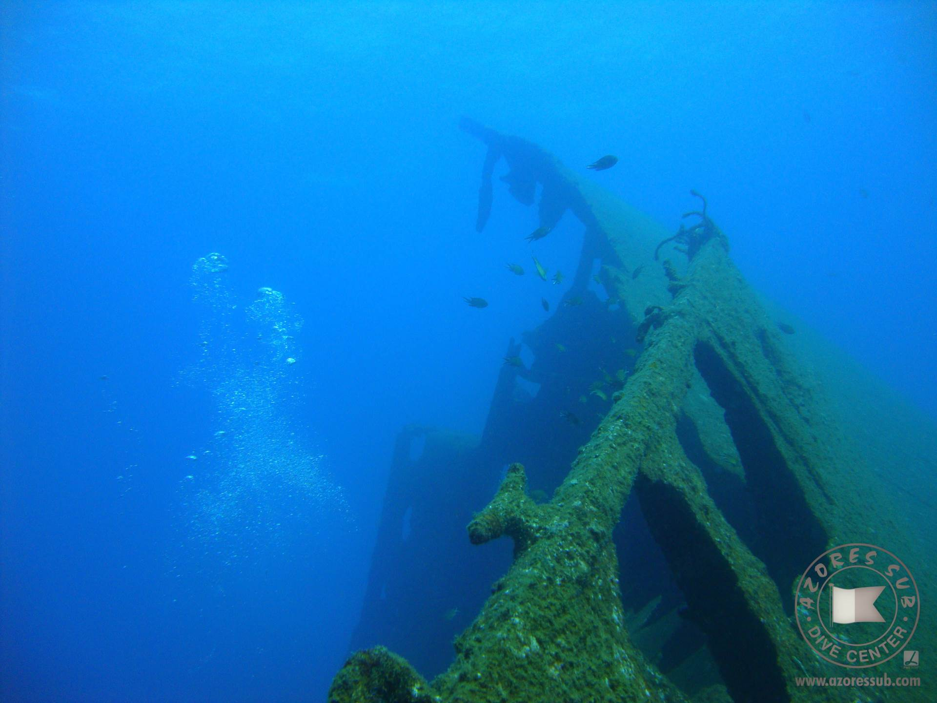 You are looking to a wreck, a Liberty Ship from II World War call DORI, during a dive trip with Azores Sub Dive Center.