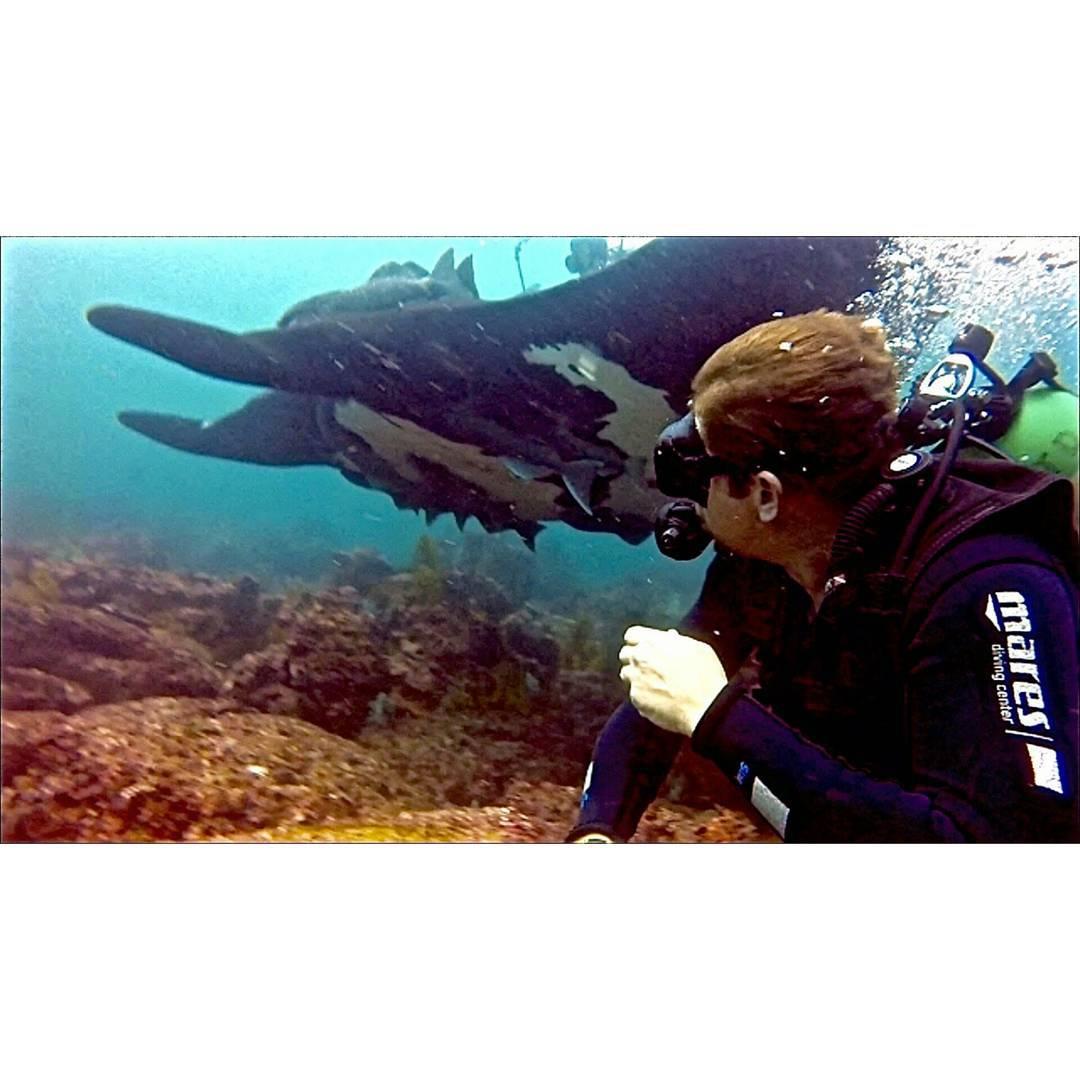 Buceo con Mantas Gigantes Bajo Cope
