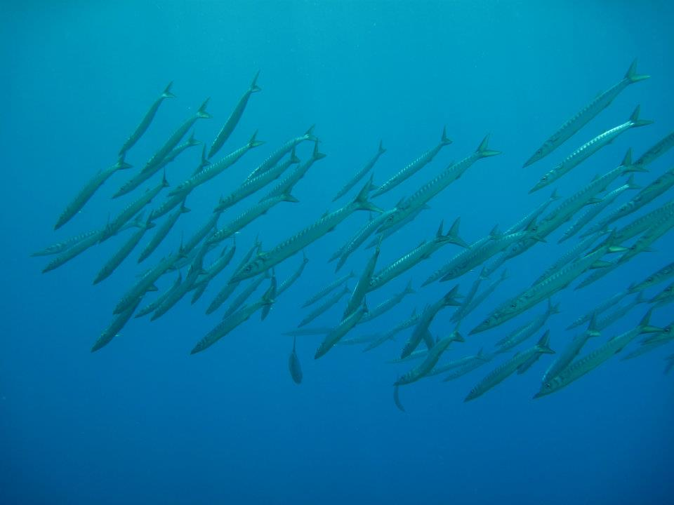 scuba diving in Pissouri