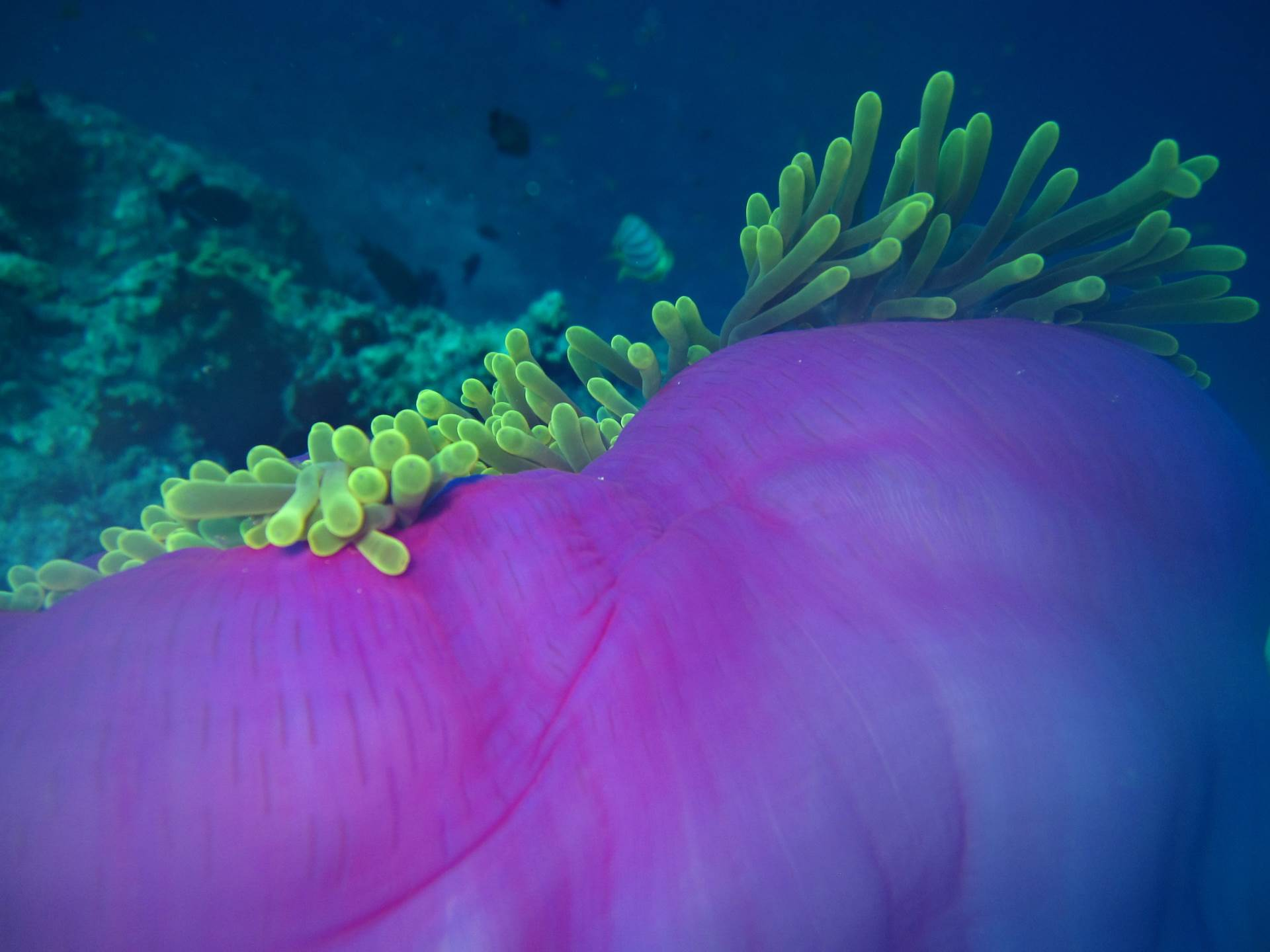 This beautiful reef is just 20 minutes away from the dive center.