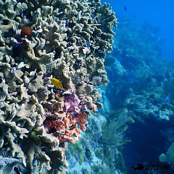 Akumal Reefs