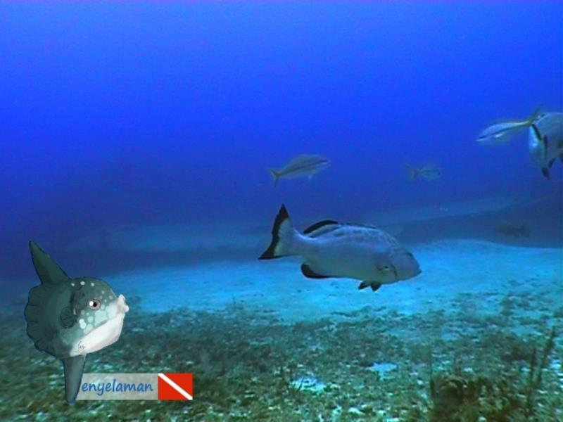 Amigo's wreck Belize