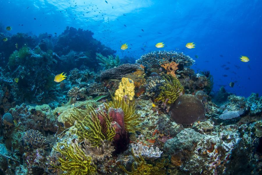 Apo Reef Scene