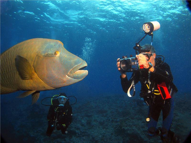 Aqualars at work.
