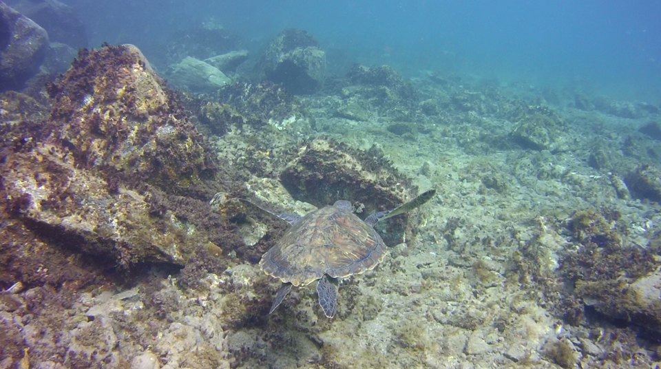 Discover scuba with Turtle Tenerife