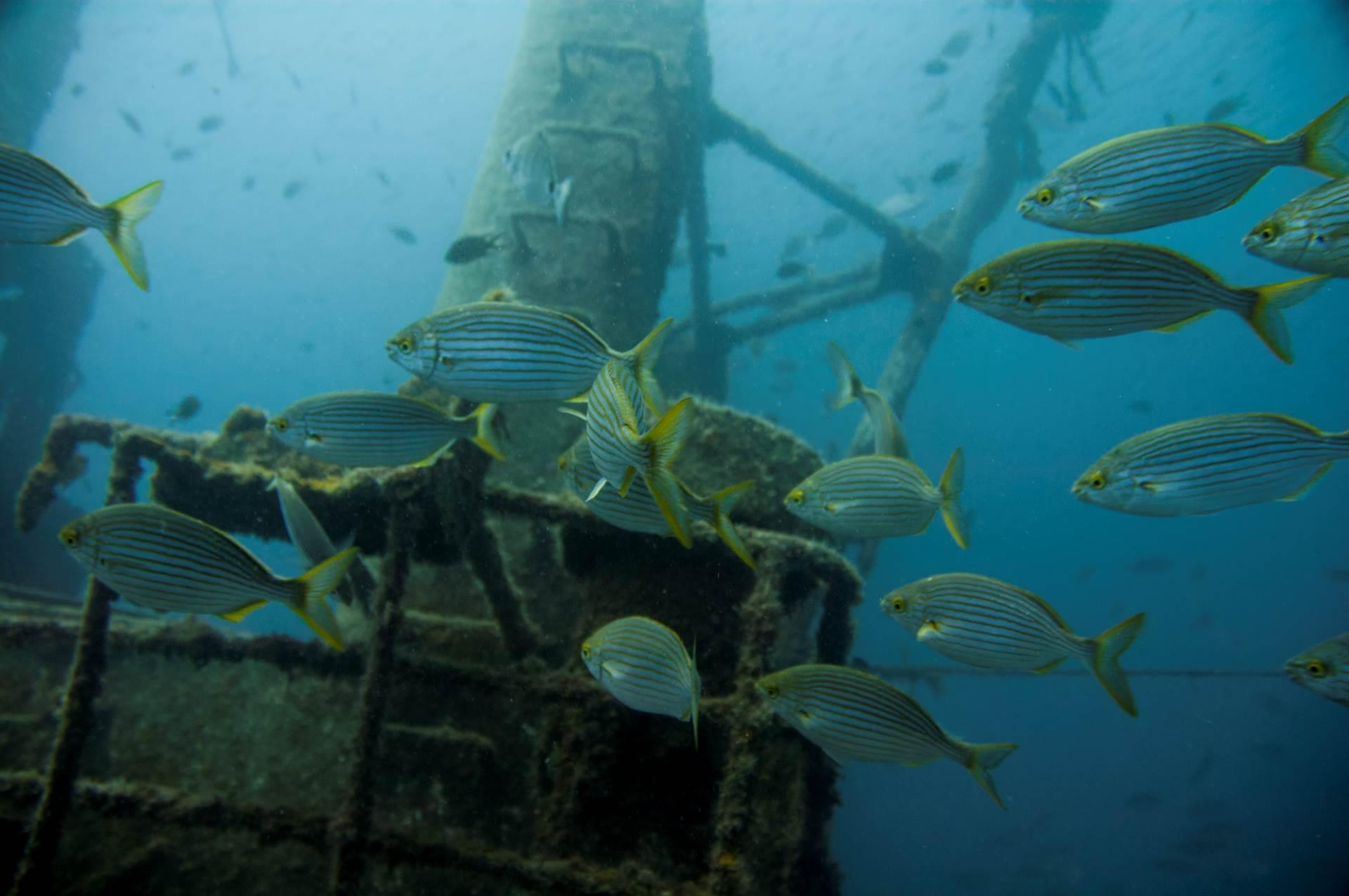 Salima´s El Penon wreck