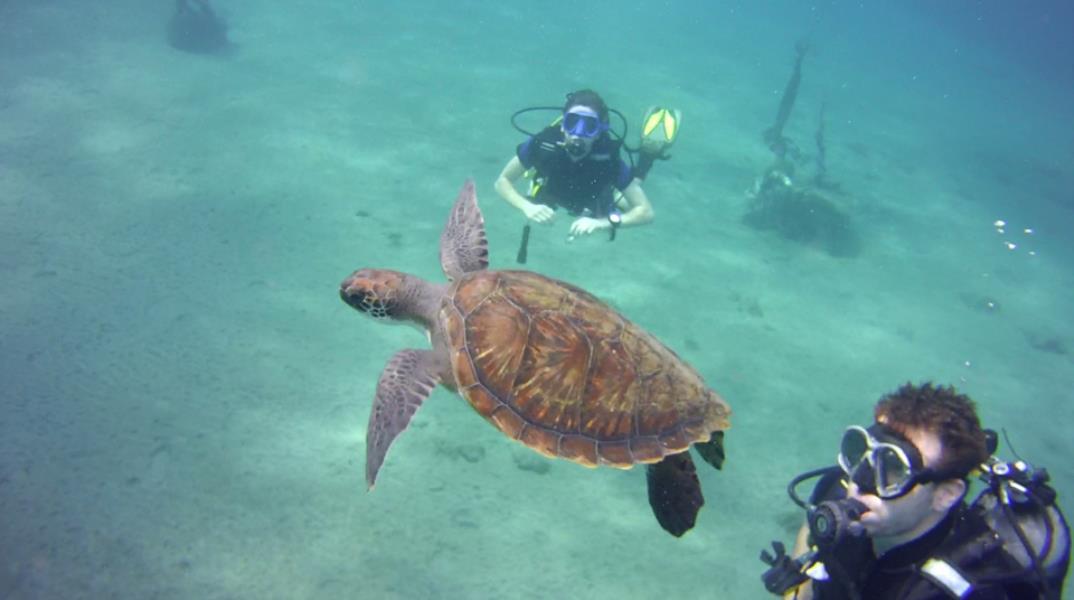 Aquarius dive enter Tenerife