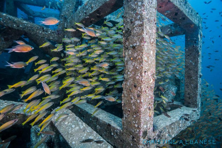 Artificial Reefs/Real Life