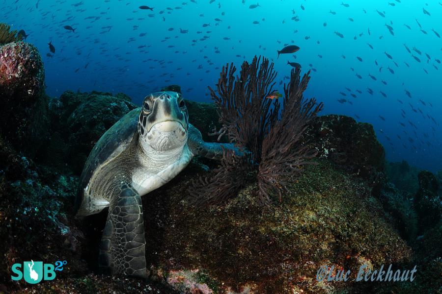 Beautiful turtle.