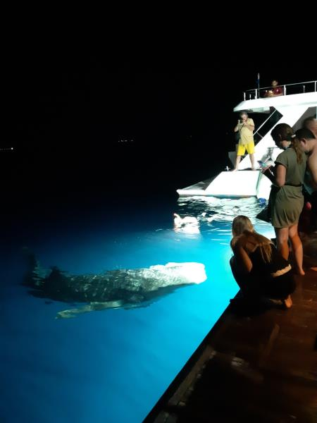 Best Of Maldives Whale Shark