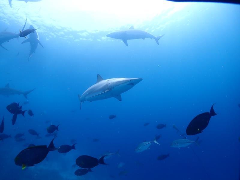 Best of Southern Atoll Maldives