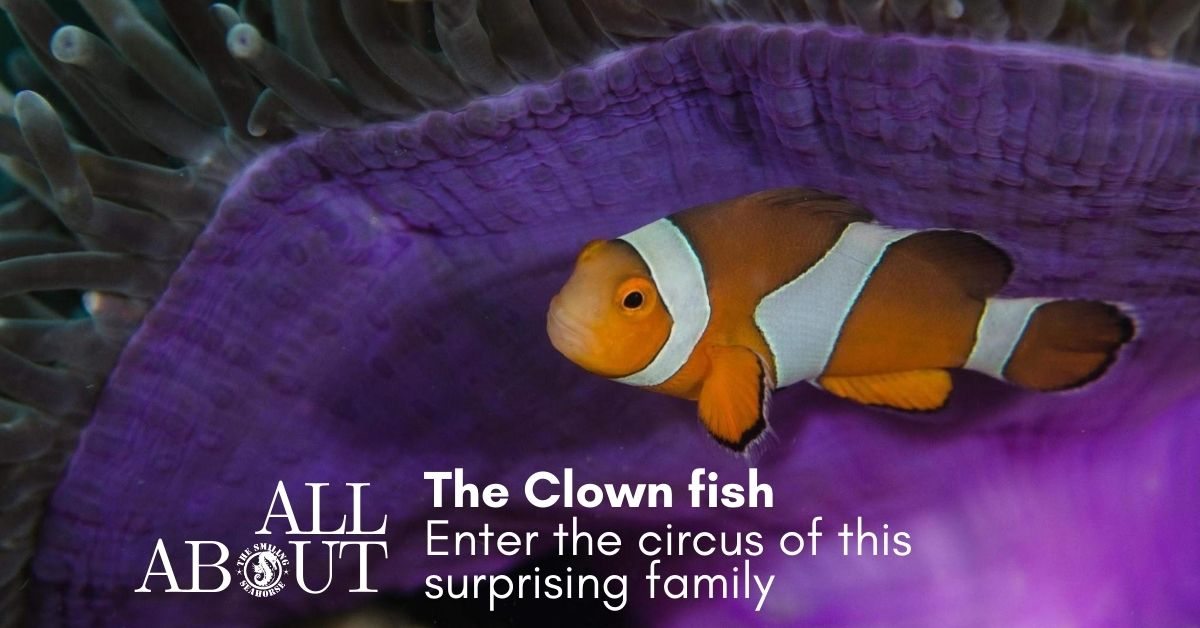 Enter the circus of the amazing clownfish family !