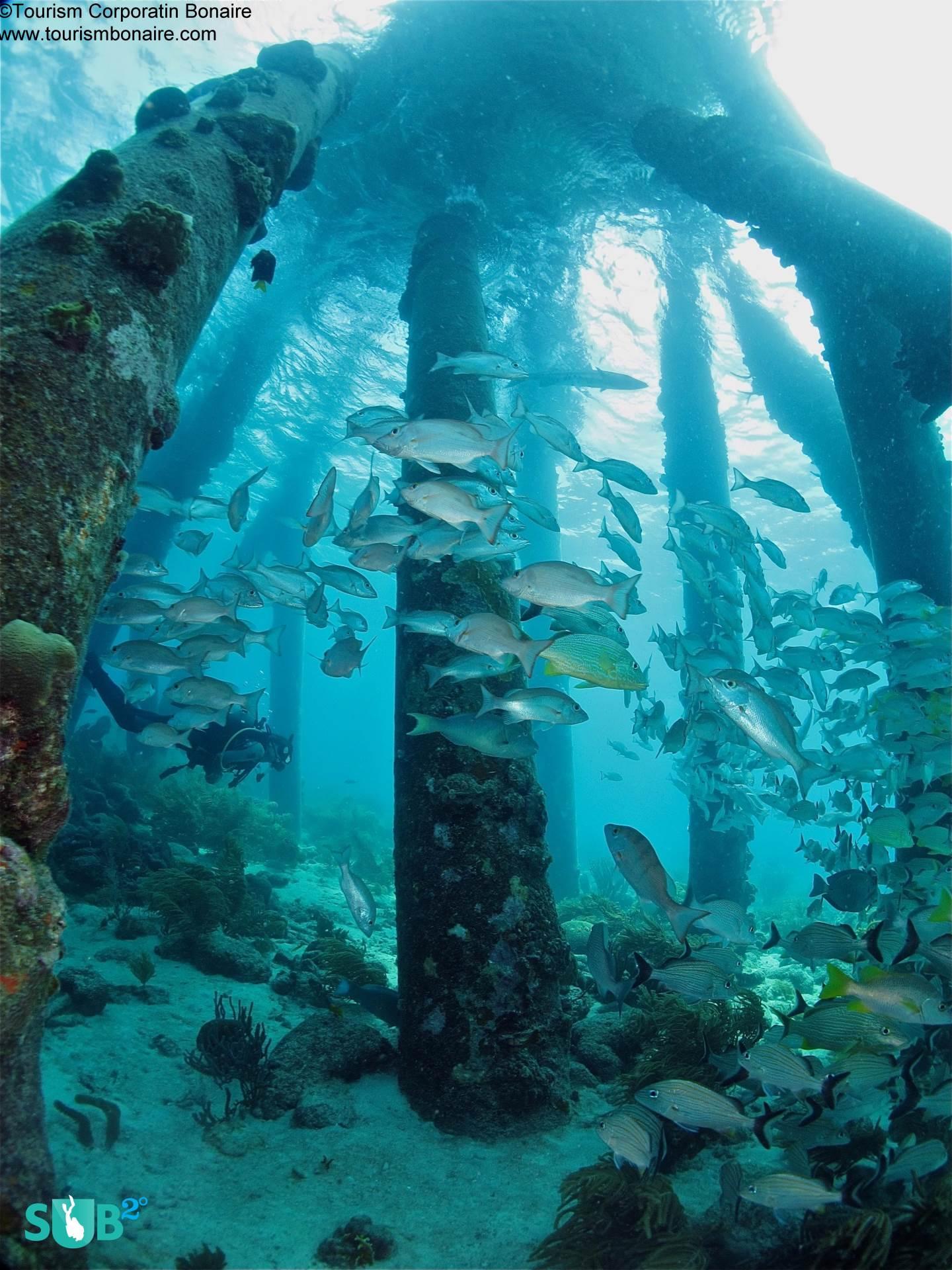 Bonaire's Salt Pier Dazzles