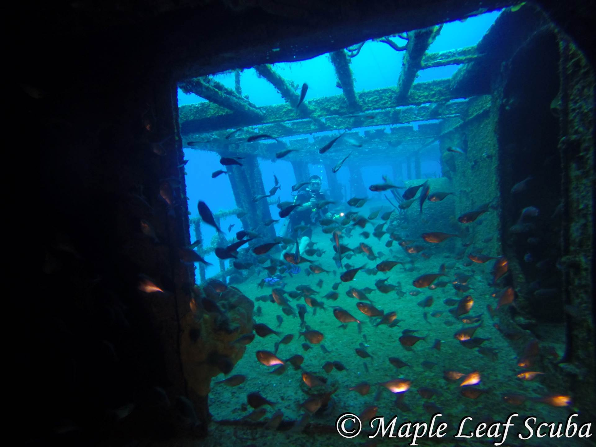 Schools of Glassy Sweepers flood the entrance way of the C-53 Felipe Xicontencatl in Cozumel, Mexico