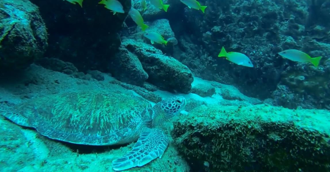 Cano_island_Costa_Rica_diving_destination