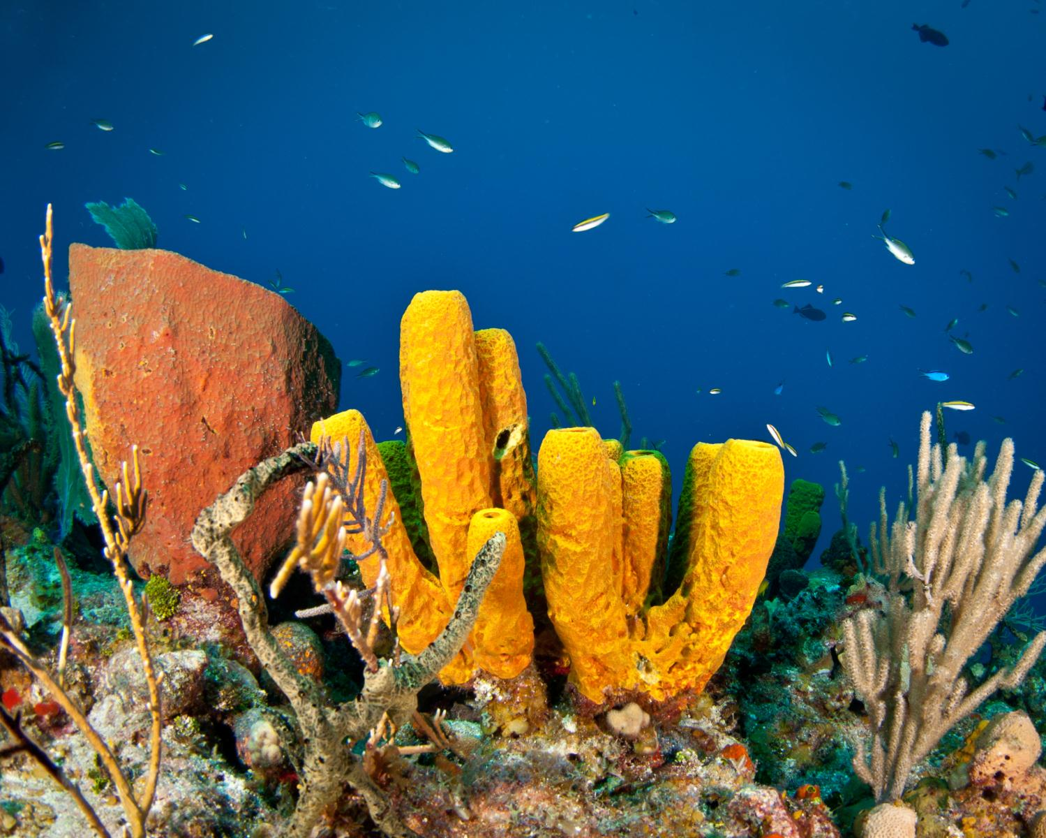 The Cayman Islands offer a Garden of Underwater Eden just offshore