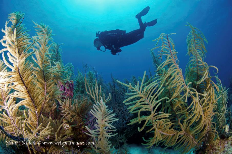Chris Softcoral
