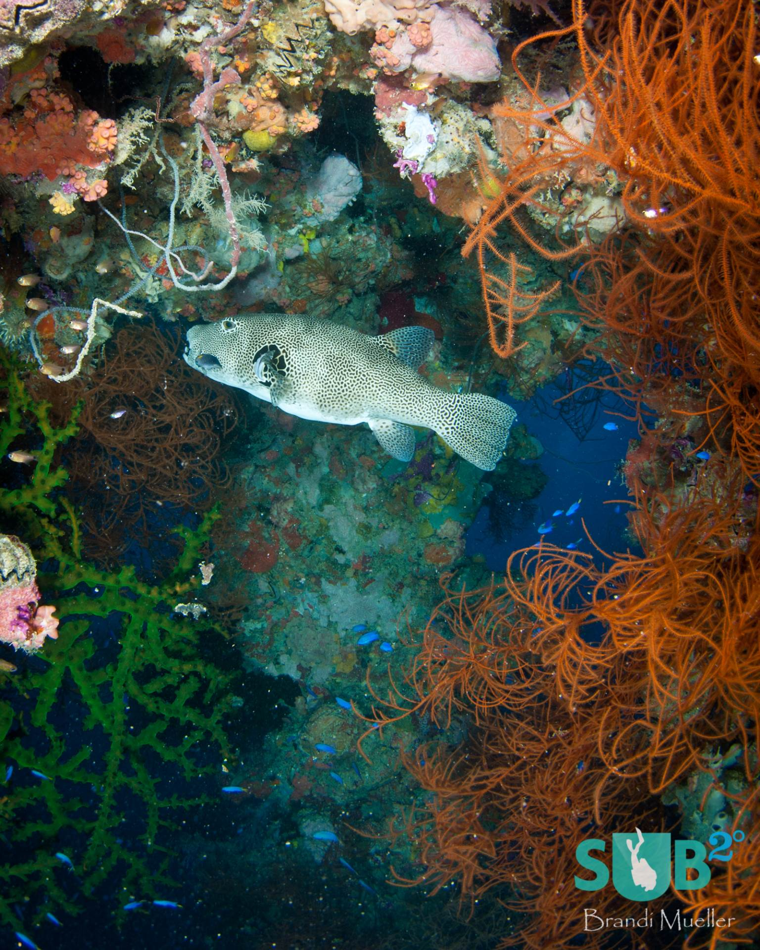 Underwater since 1944, the Shinkoku Maru was sunk during WWII.  Now it is covered in corals and home to much ocean life.