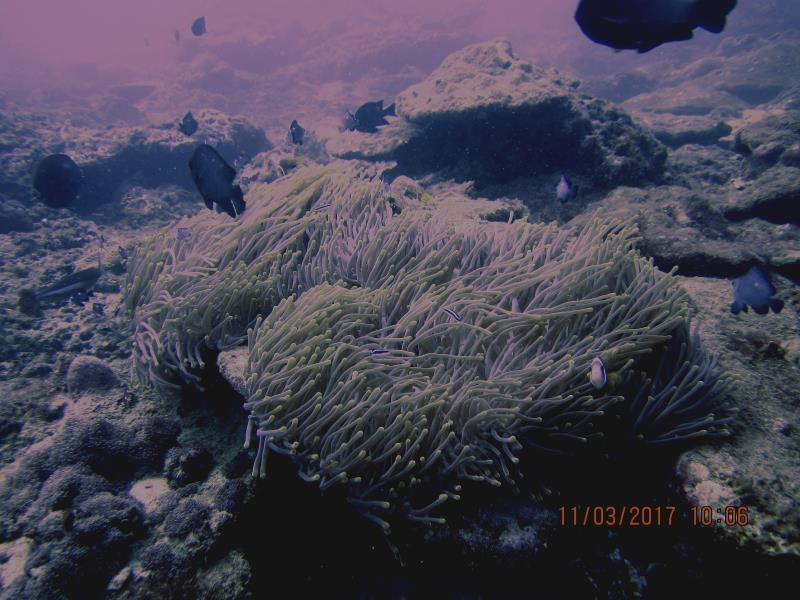 Coral fish beauty 1