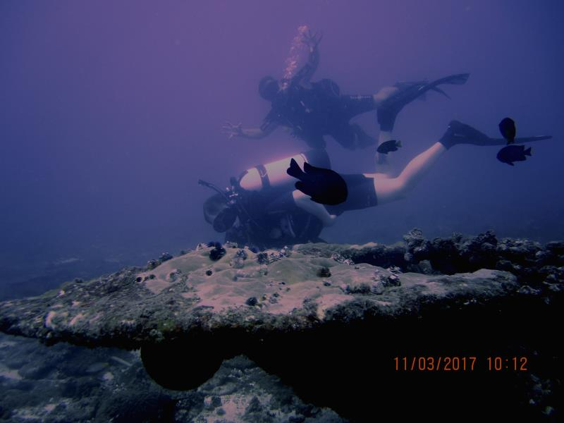 Coral fish diver