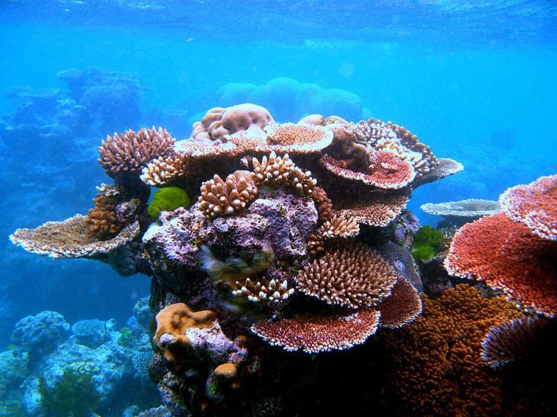 Coral Outcrop, Flynn Reef