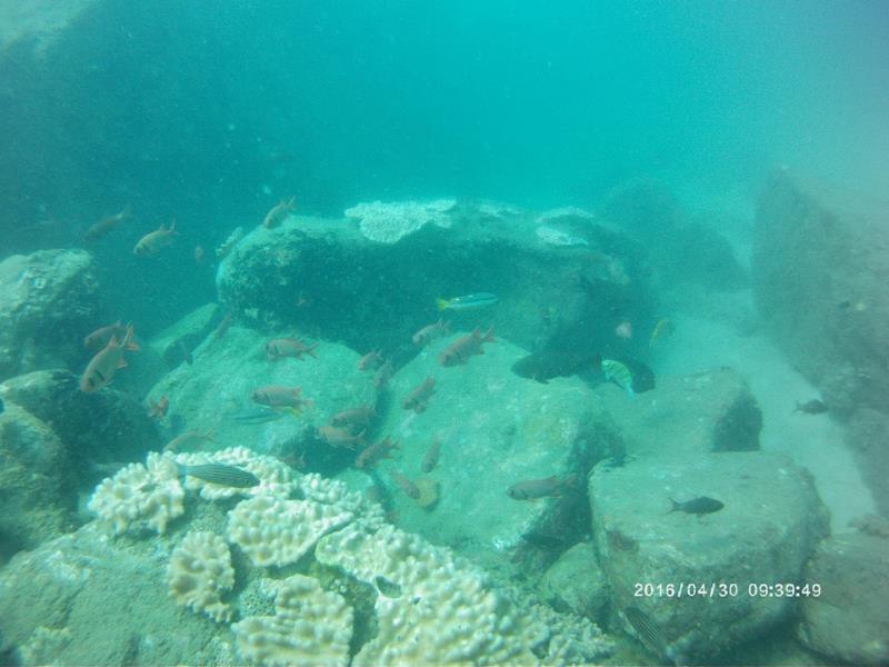 coral_fish