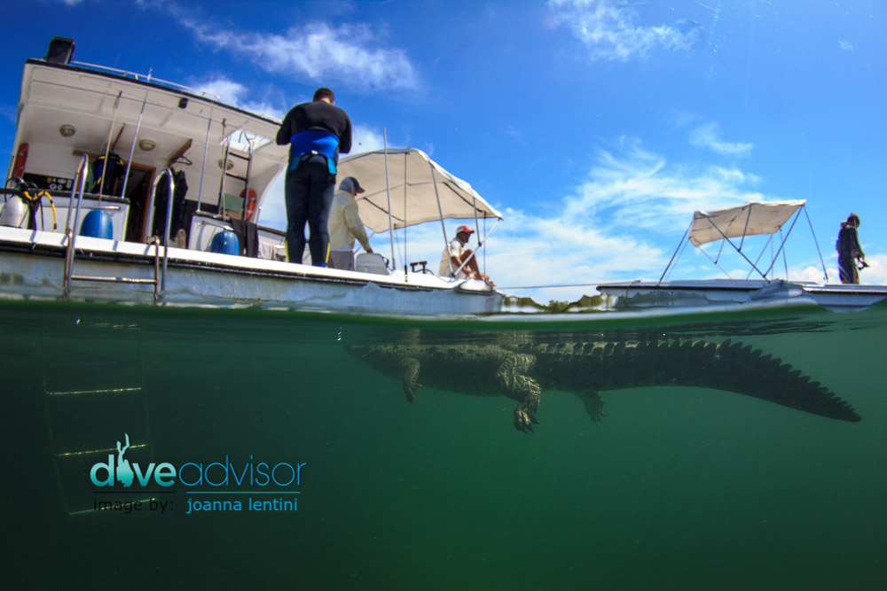 Defying my fears, I found myself in the mangroves of Jardines de la Reina photographing saltwater crocodiles underwater.