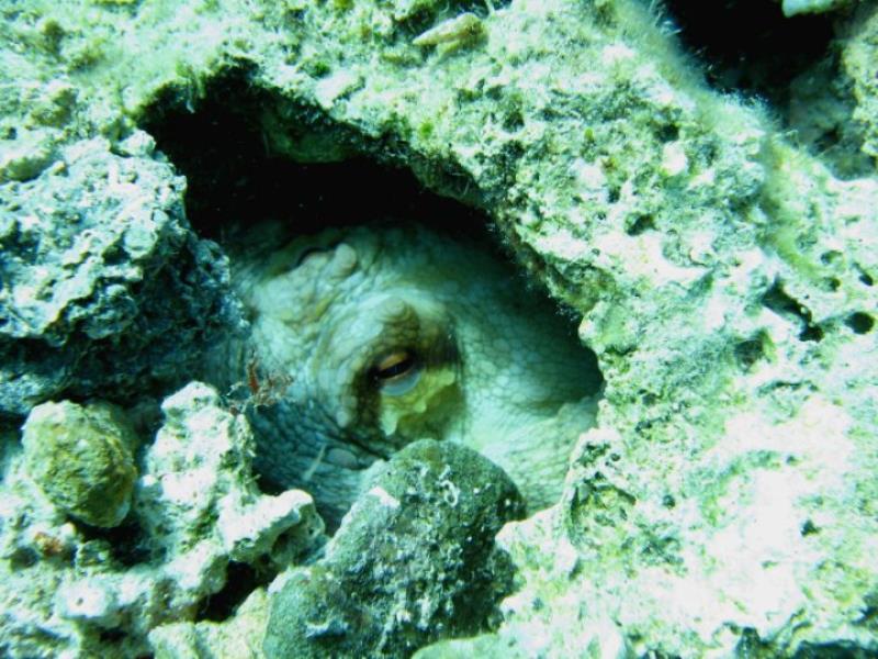 Cyprus Diving Adventures28302_102685696447756_2660243_n