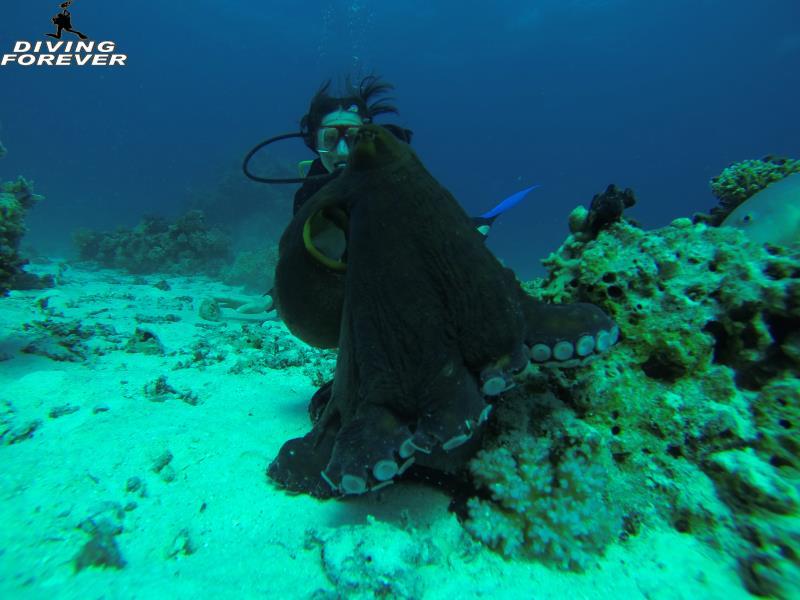 deutsche tauchschule hurghada www.divingforever