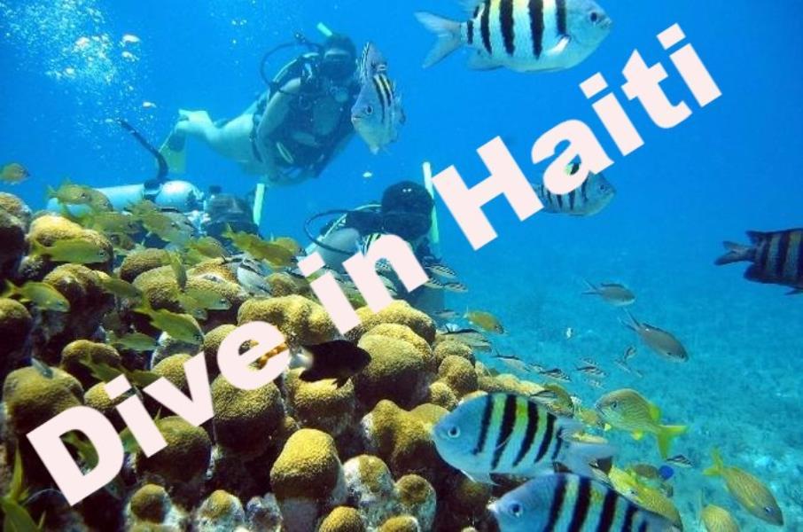 dive in haiti for facebook