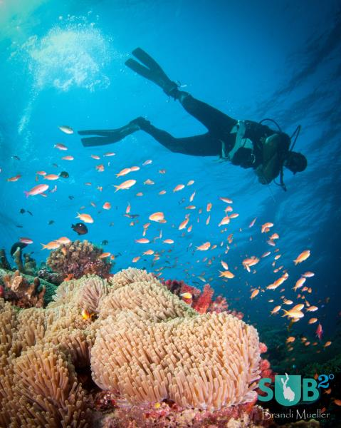 Diver and the Fiji Reef