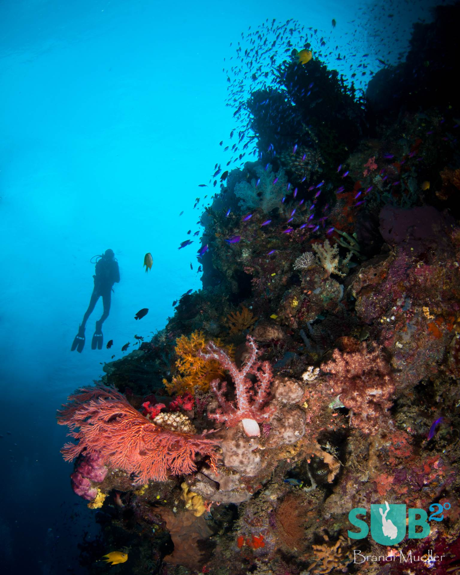 Colorful soft corals and purple anthias are abundant on coral bommies.