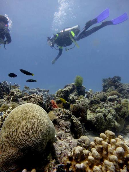 Diving in Philipine