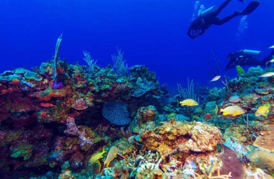 Diving in the Cuba