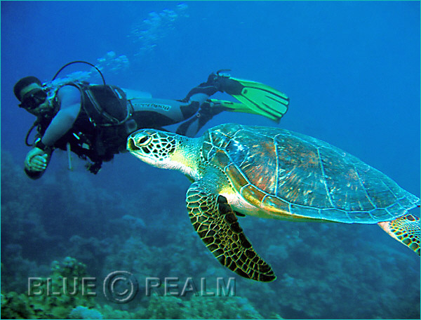 Enjoy diving with turtle! The best time to have a chance of swimming with turtle is between April to December at Dahab