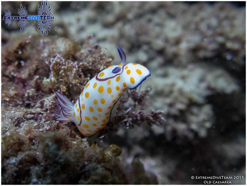 Diving_in_Caesarea_06_2015_006