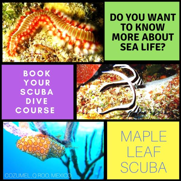 Do you want to know more about sea life?