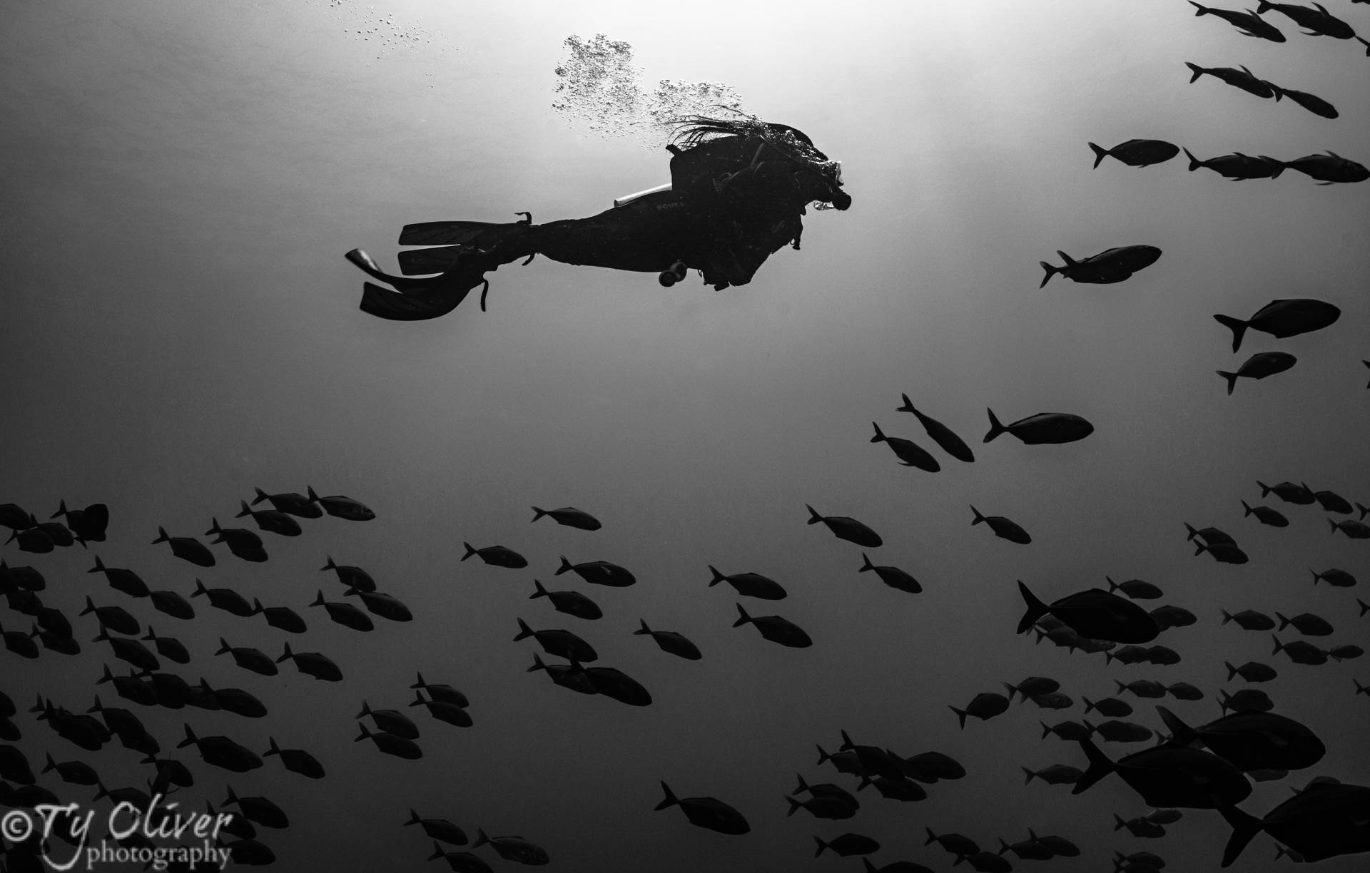 A diver surrounded by big eye jacks. Roca Partida, Socorro Islands.