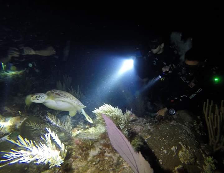 1 tank dive NIGHT DIVE in JARDINES REEF