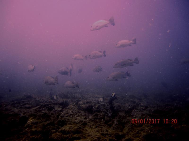 Fish 7