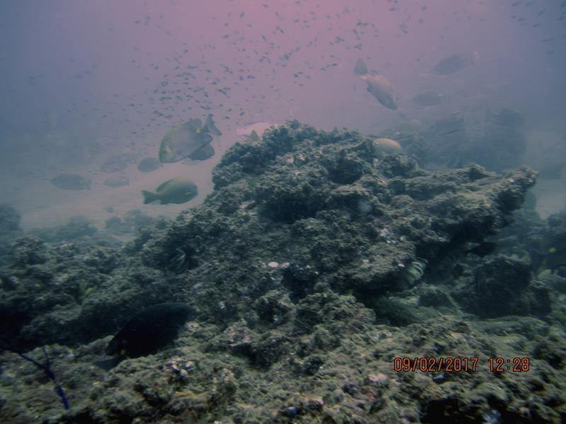 Fish lots 1